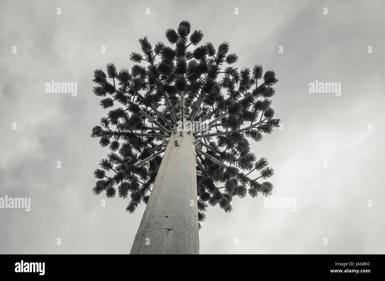 telecommunication tower arial disguised as tree - Stock Image
