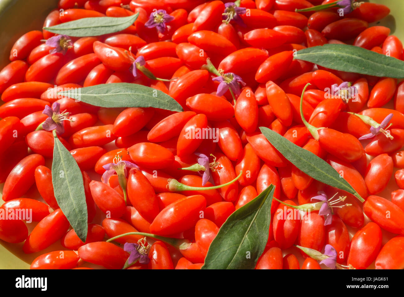 Fresh Goji Berries With Flowers And Leaves China Stock Photo Alamy
