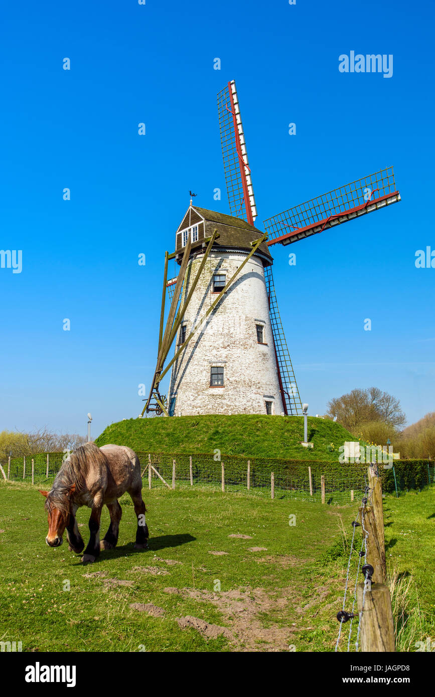 Windmill and Belgian horse, Damme, West Flanders, Belgium - Stock Image