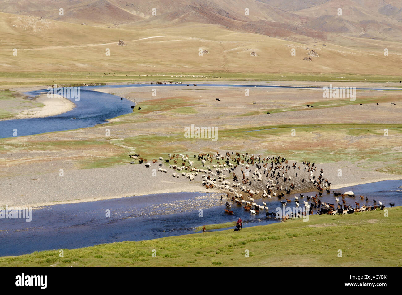 Mongolia,Central Asia,Ovorkhangai province,historical Orkhon valley,UNESCO world heritage,Orkhon flux,flock of sheep,pasture, Stock Photo