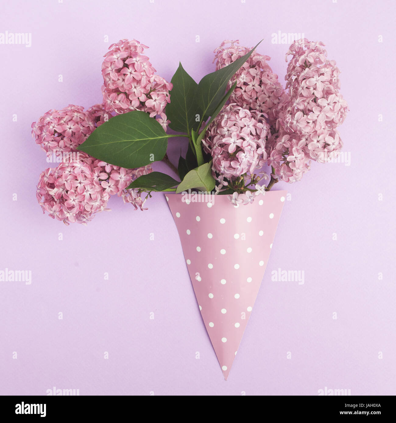 Bunch Of Lilac Flowers In Paper Cone On Purple Background From Above