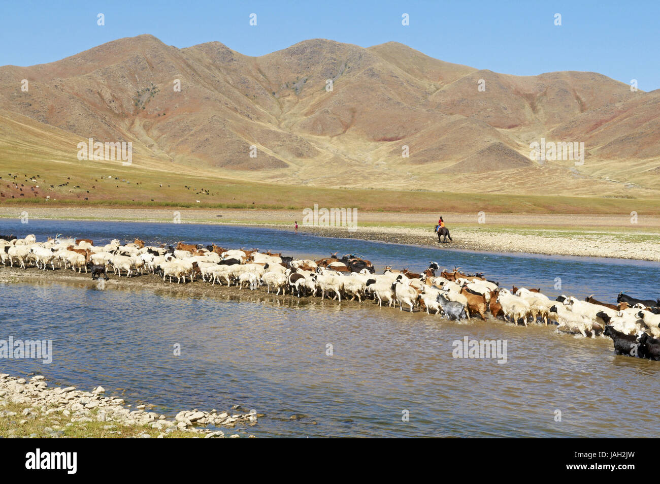 Mongolia,Central Asia,Ovorkhangai province,historical Orkhon valley,UNESCO world heritage,Orkhon flux,flock of sheep, Stock Photo