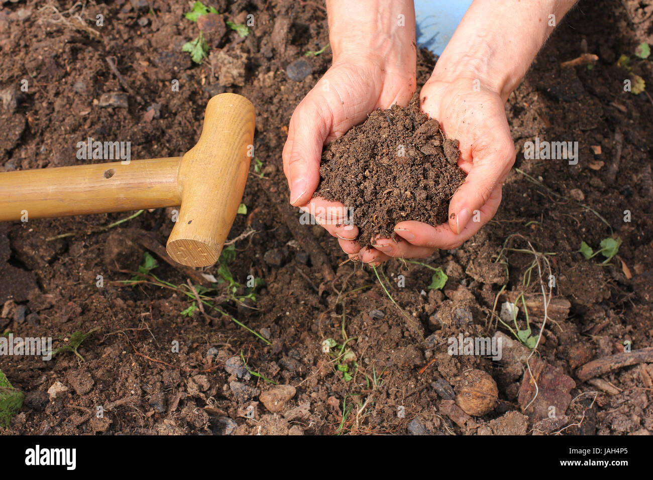 compost,composted earth Stock Photo