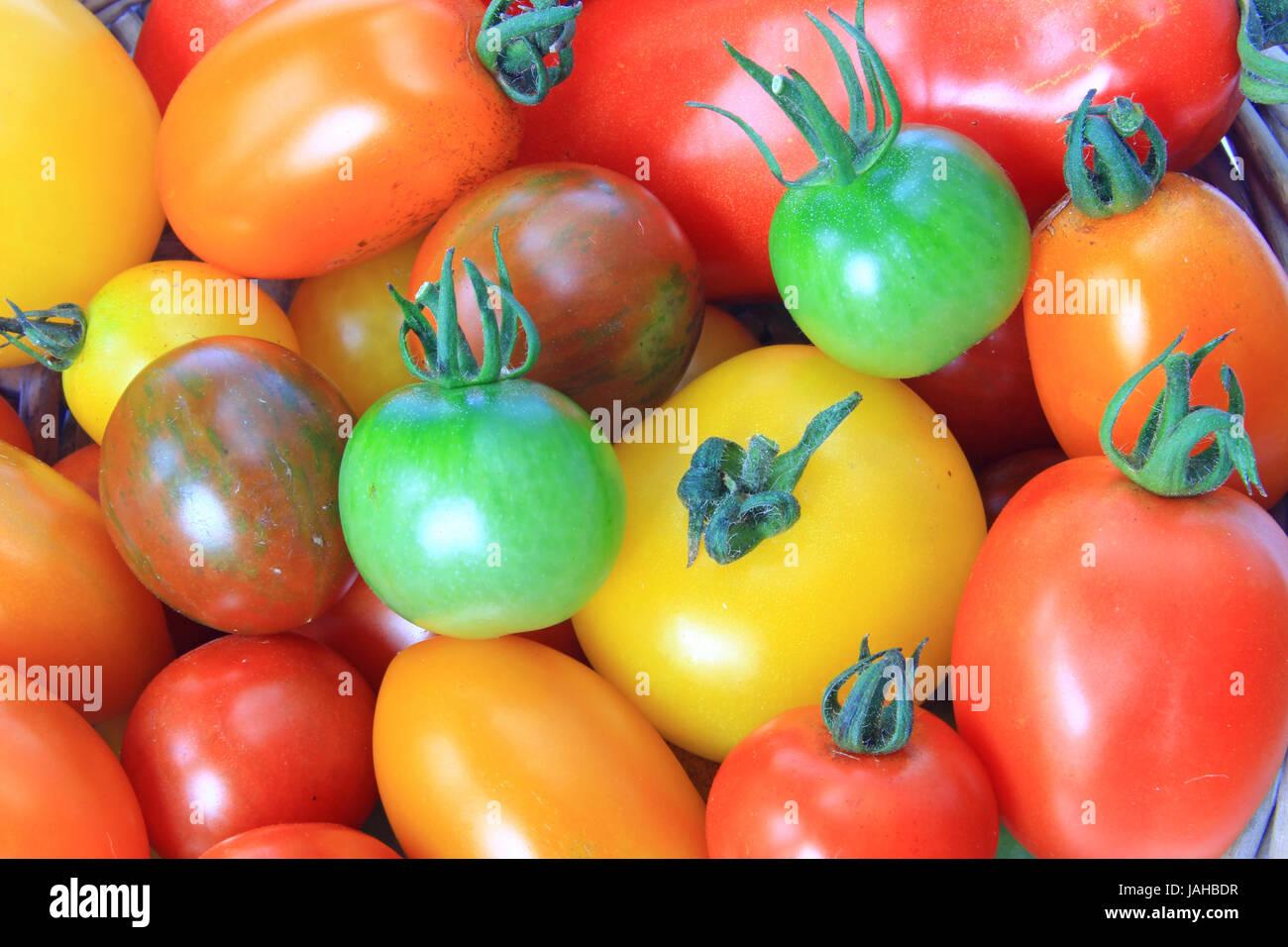 Zahlreiche verschiedene Tomatensorten in unterschiedlichen Farben (Solanum lycopersicum) - Stock Image