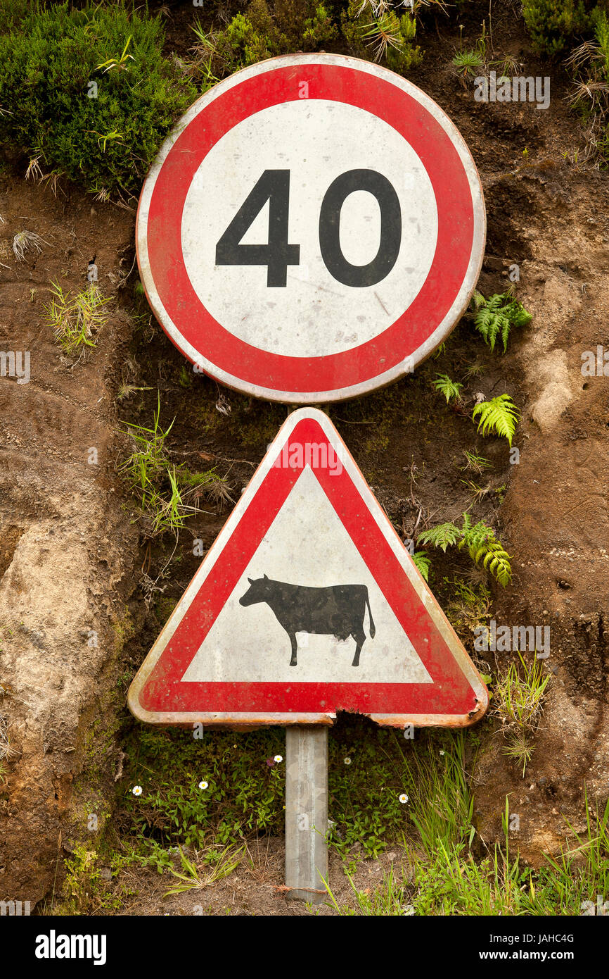 Traffic signs. Cattle crossing warning sign and mandatory speed limit sign. Azores islands, Portugal. - Stock Image