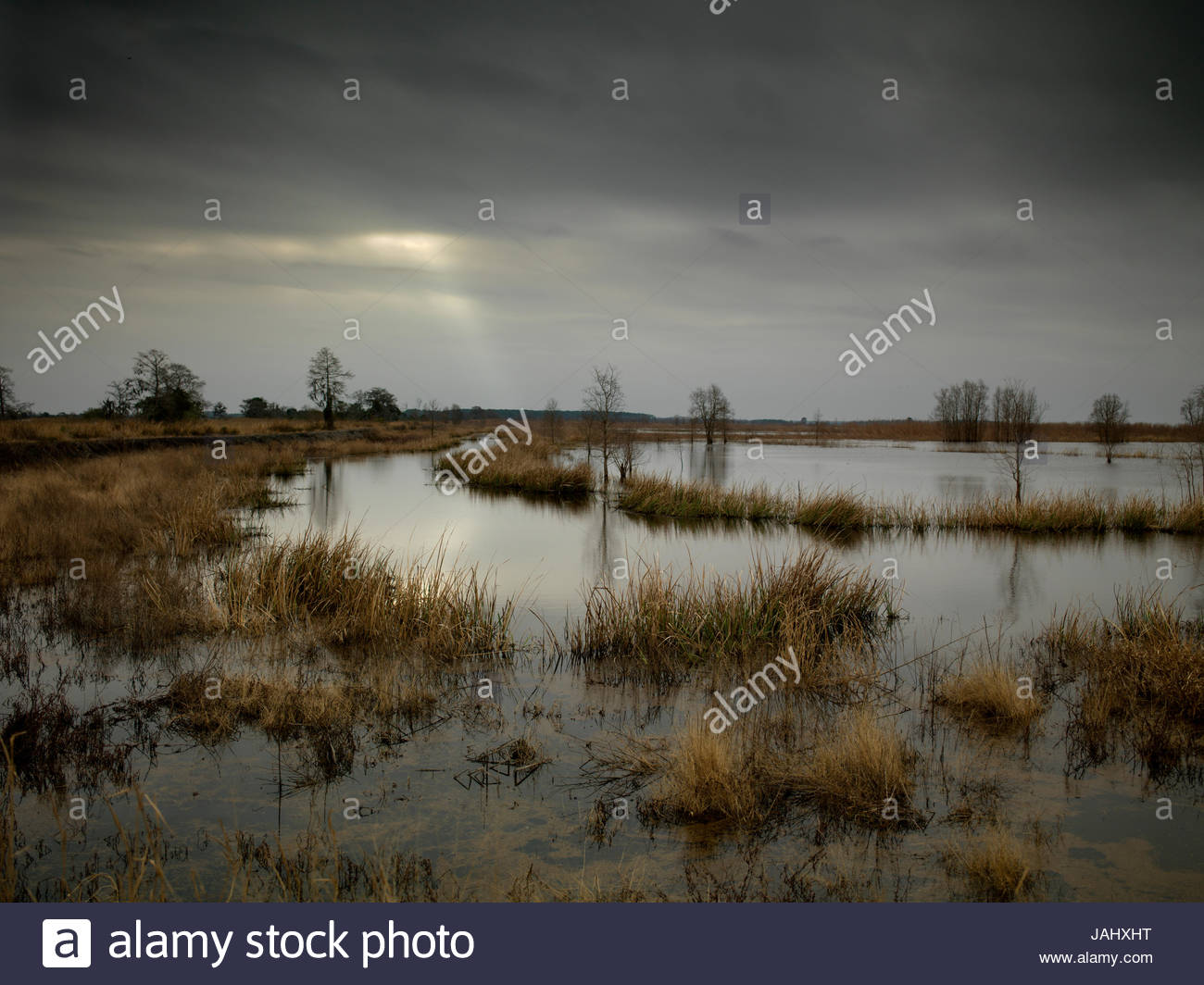 Wetland for waterfowl. - Stock Image