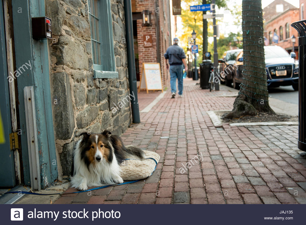 A pet dog rests on a dog bed outside a building Old Town Alexandria. - Stock Image