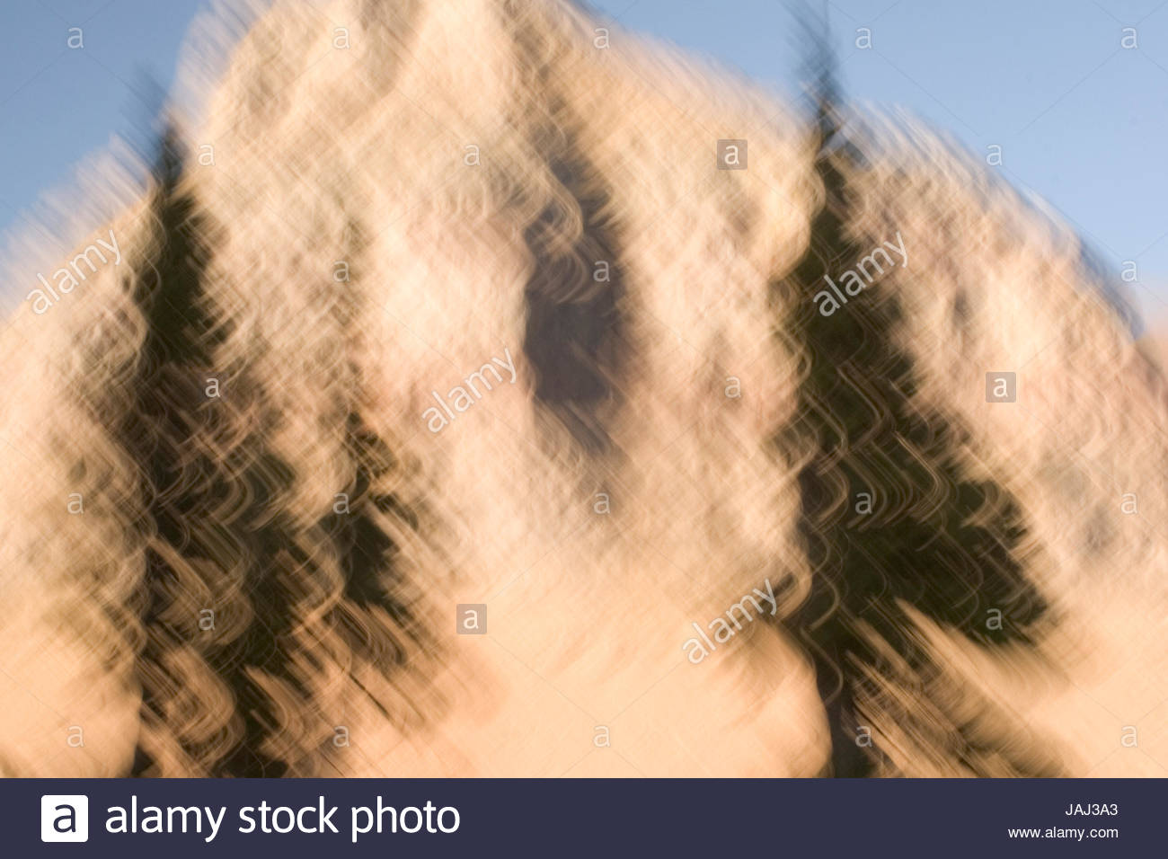 Conifer trees and mountains in Glacier National Park, Montana. - Stock Image
