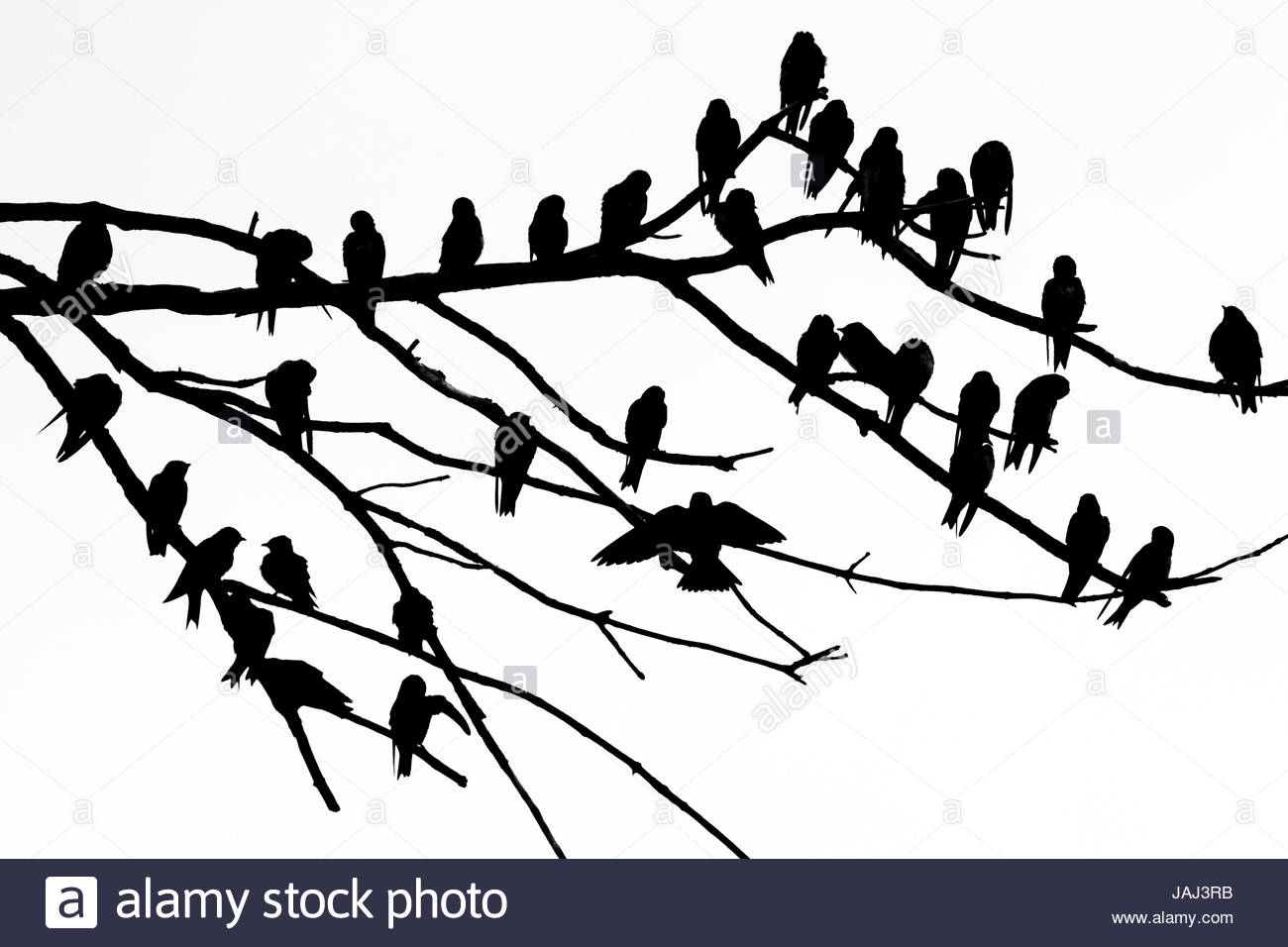 Silhouette of birds perched on the branches of a dead tree above the Occoquan River. - Stock Image