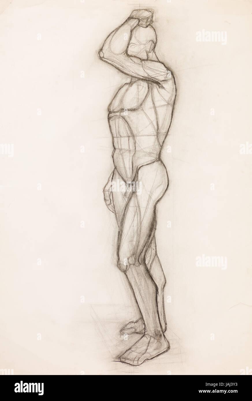Human body muscles pencil drawing stock photos human body muscles