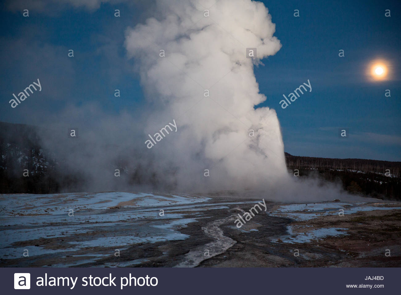 Old Faithful erupts in Yellowstone National Park's Upper Geyser Basin. - Stock Image