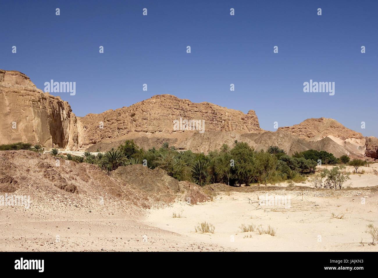 Egypt,Sinai,desert Sinai,area of Nuweiba,oasis Ain Khudra, - Stock Image