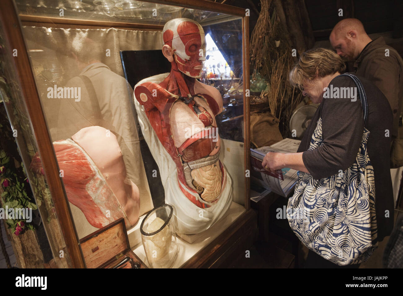 England,London,Southwark,museum 'Old Operating Theatre',exhibit,human body, - Stock Image