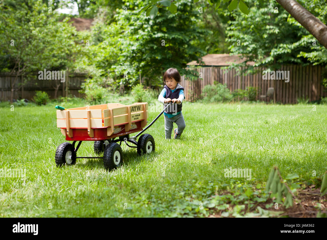 Asian boy, age 3, playing with a Radio Flyer wagon,on lawn - USA - Stock Image