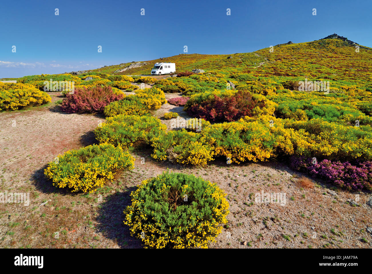Motorhome alone in the middle of green mountain vegetation with yellow and violett flowers in blossom - Stock Image