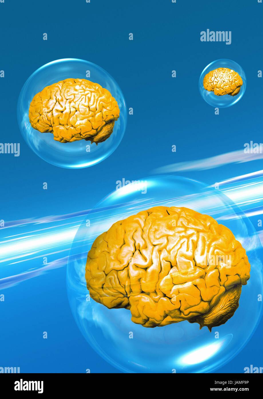 Brains, - Stock Image