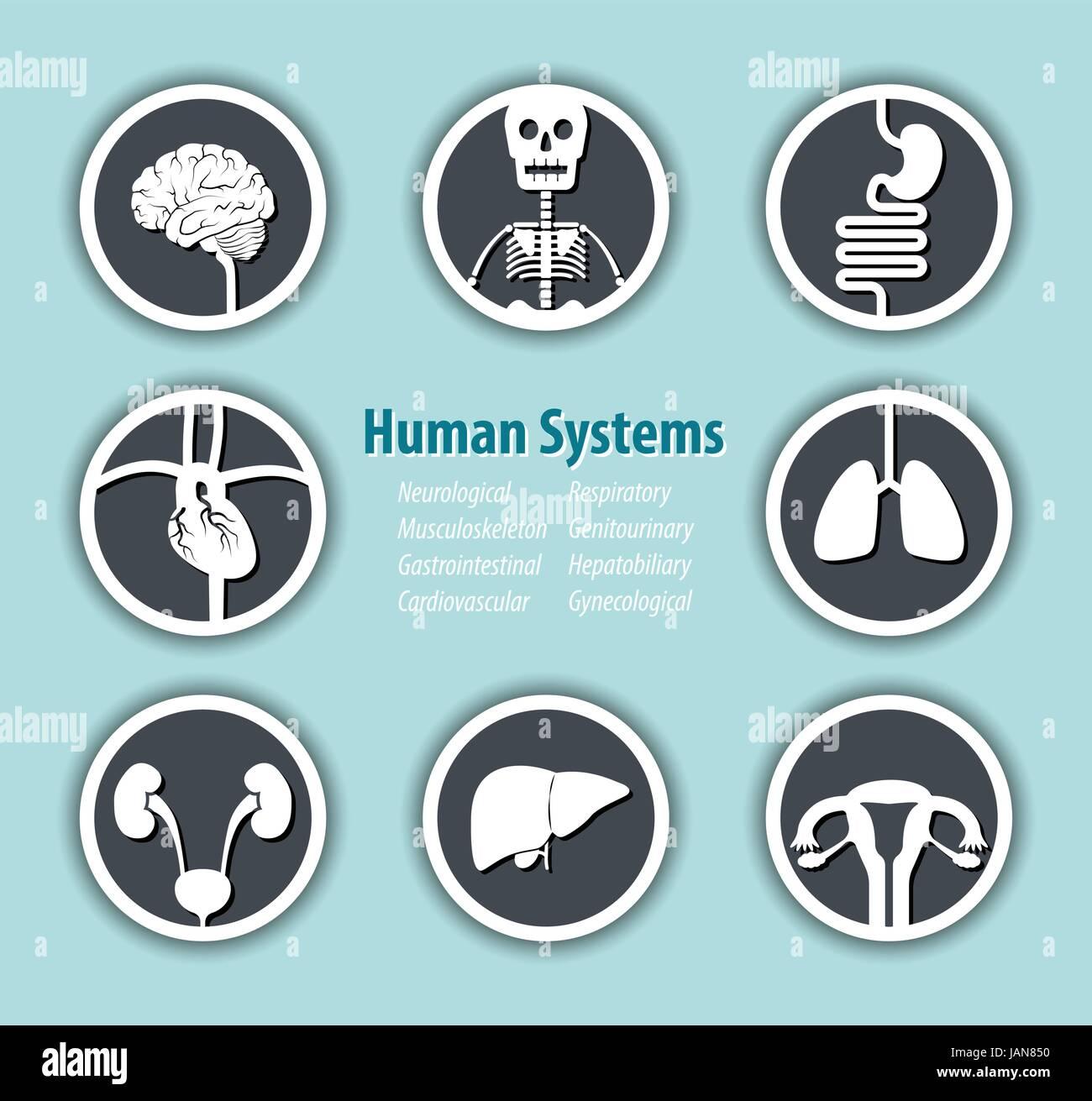 Human Systems Icon . ( Neurological . Musculoskeleton . Gastrointestinal . Cardiovascular . Respiratory . Genitourinary - Stock Image