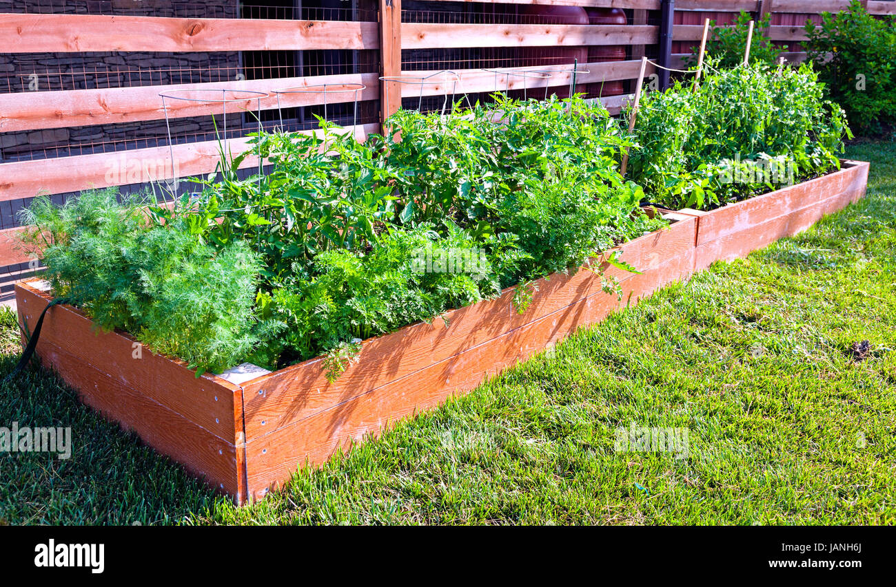 Small Vegetable Garden By The Side Of The House Stock Photo Alamy