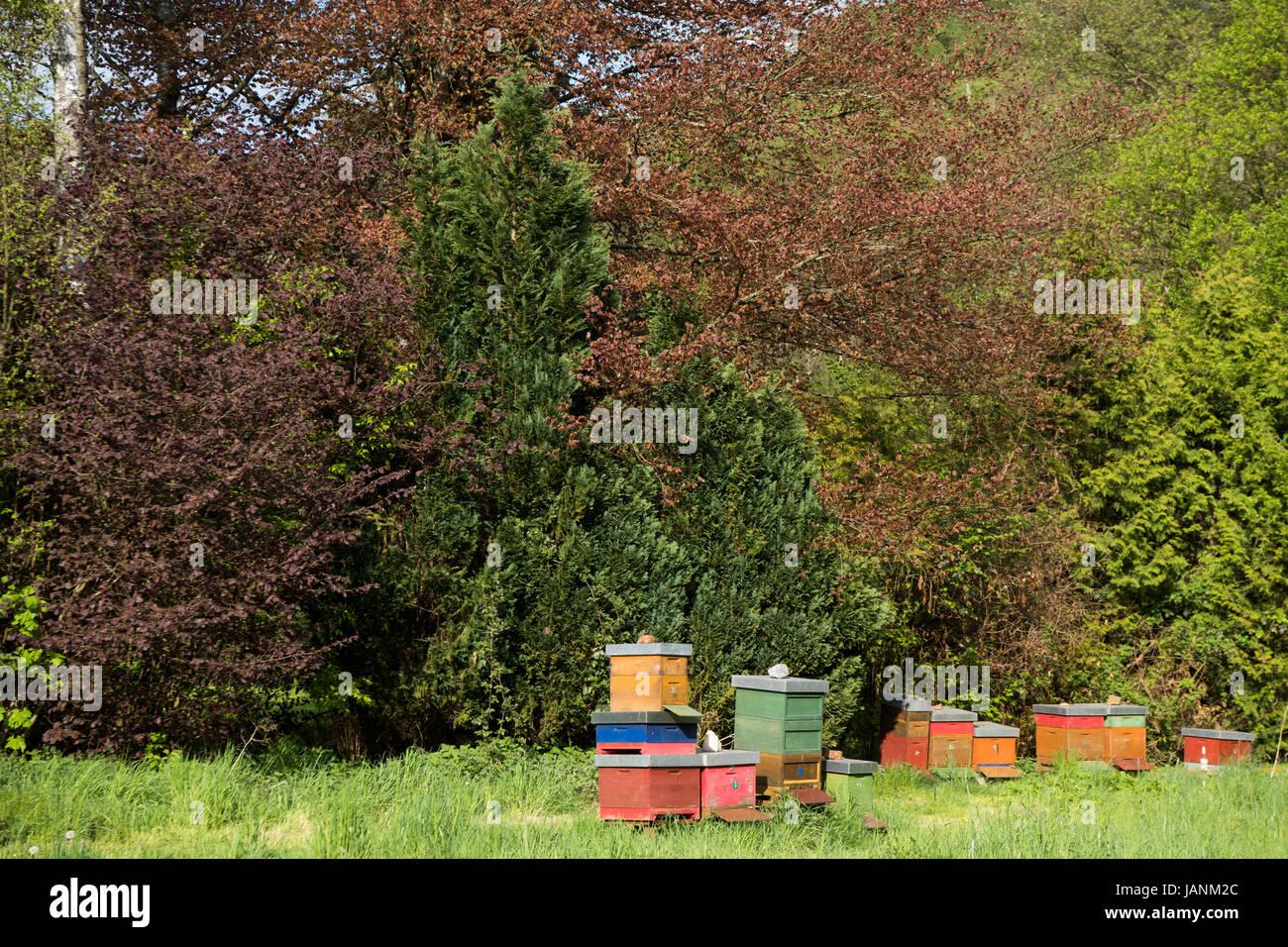 BRD, Nordrhein-Westfalen, Oberbergischer Kreis, Nümbrecht-Benroth, Bienenkästen - Stock Image