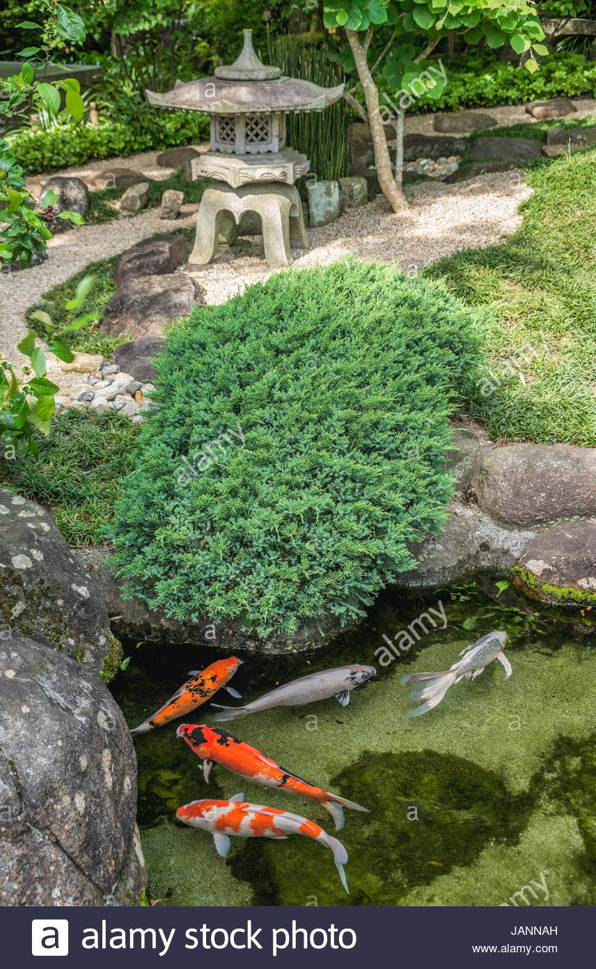 Koi Pond in the Garden of Hase-dera temple, commonly called the Hase-kannon, one of the Buddhist temples in Kamakura, - Stock Image