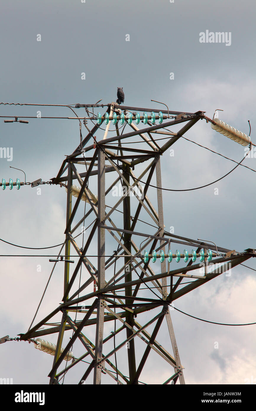 A plastic Owl mounted high up on a National Grid high tension pylon in a rural setting. - Stock Image