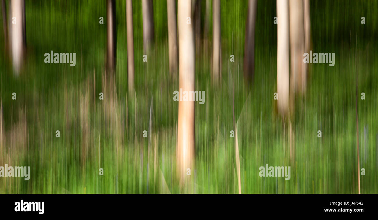 ICM, Intentional Camera Movement in Strid Woods, Bolton Abbey Estate, Wharfedale, Yorkshire Dales - Stock Image