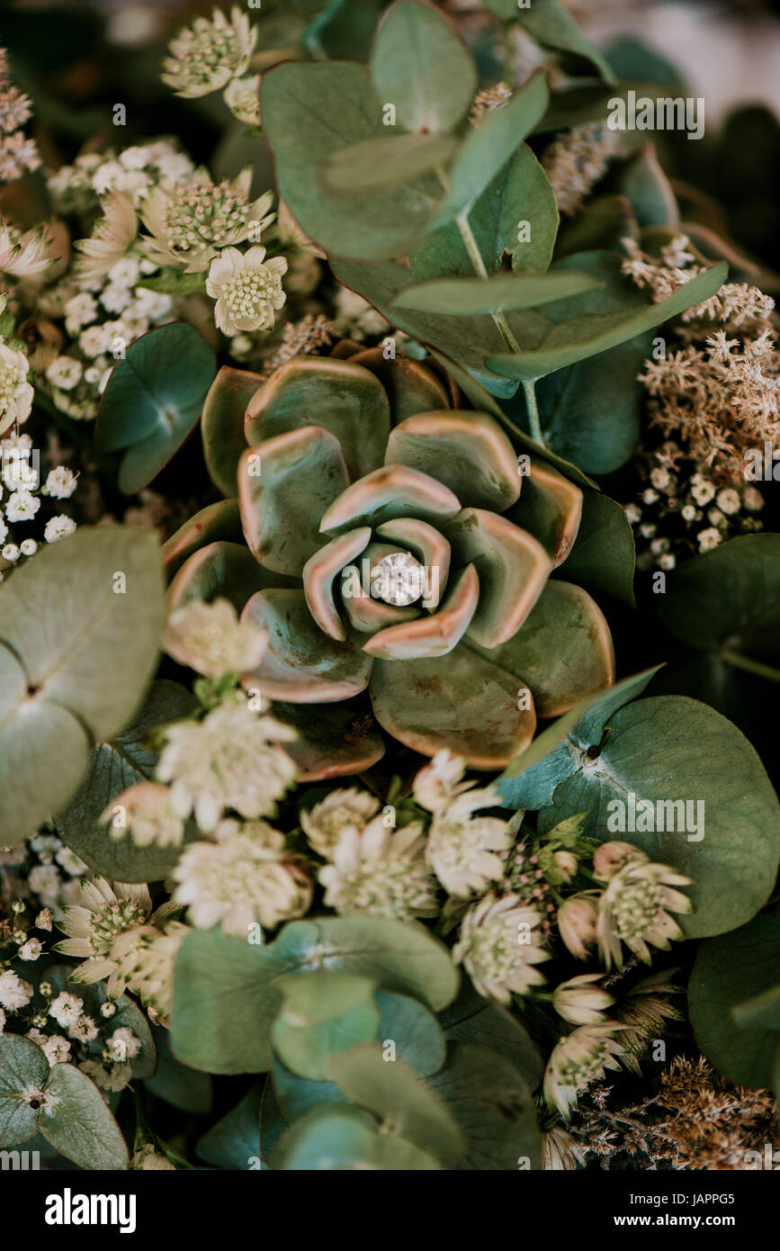 Succulent Wallpaper Background Stock Photo Alamy