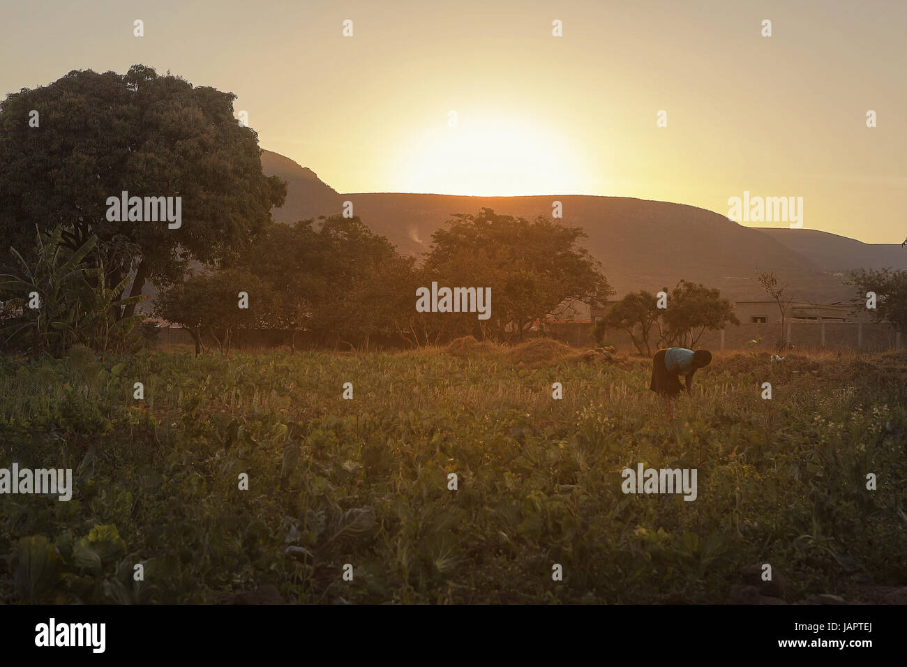 African farmer to plant in the garden at sunrise, Lubango Angola - Stock Image