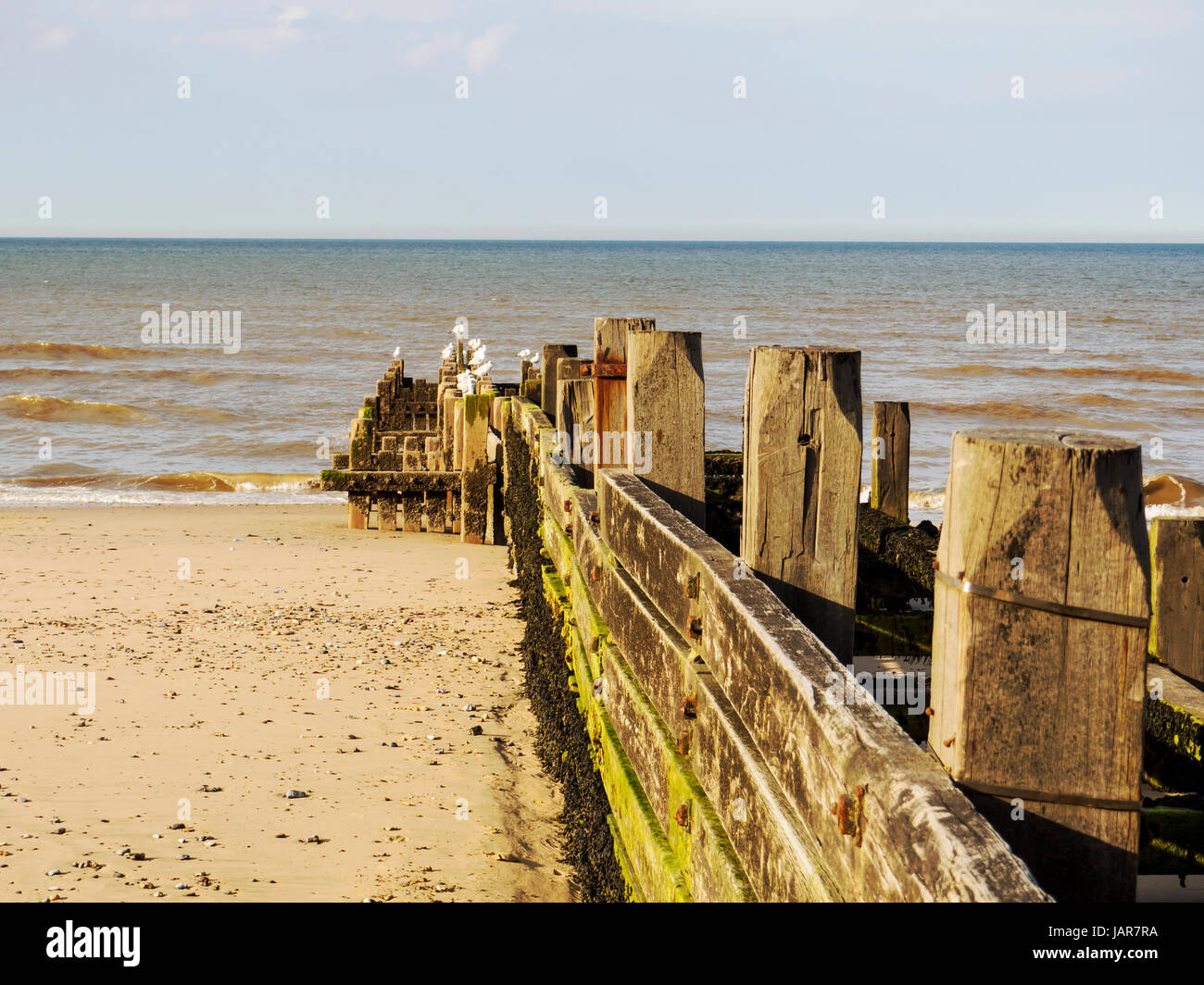 Wooden groyne, a part of the sea defences at Walcott on the North Norfolk coast. Stock Photo