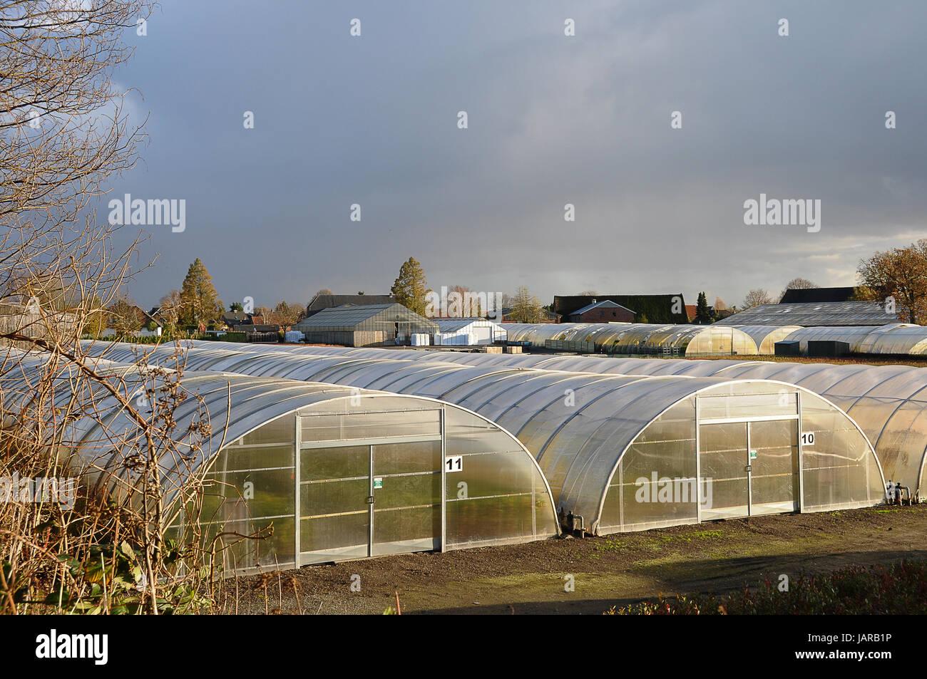 greenhouses - Stock Image