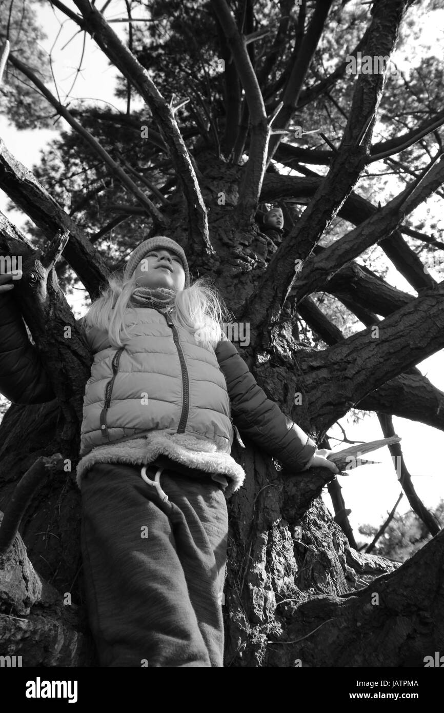 Climbing the tree for better views, children exploring and enjoying nature. - Stock Image
