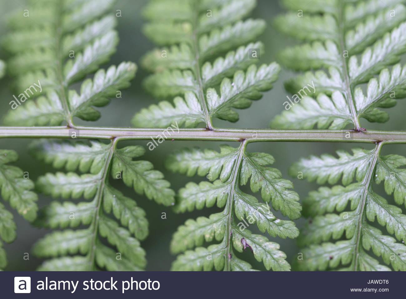 Details of a fern leaf. - Stock Image