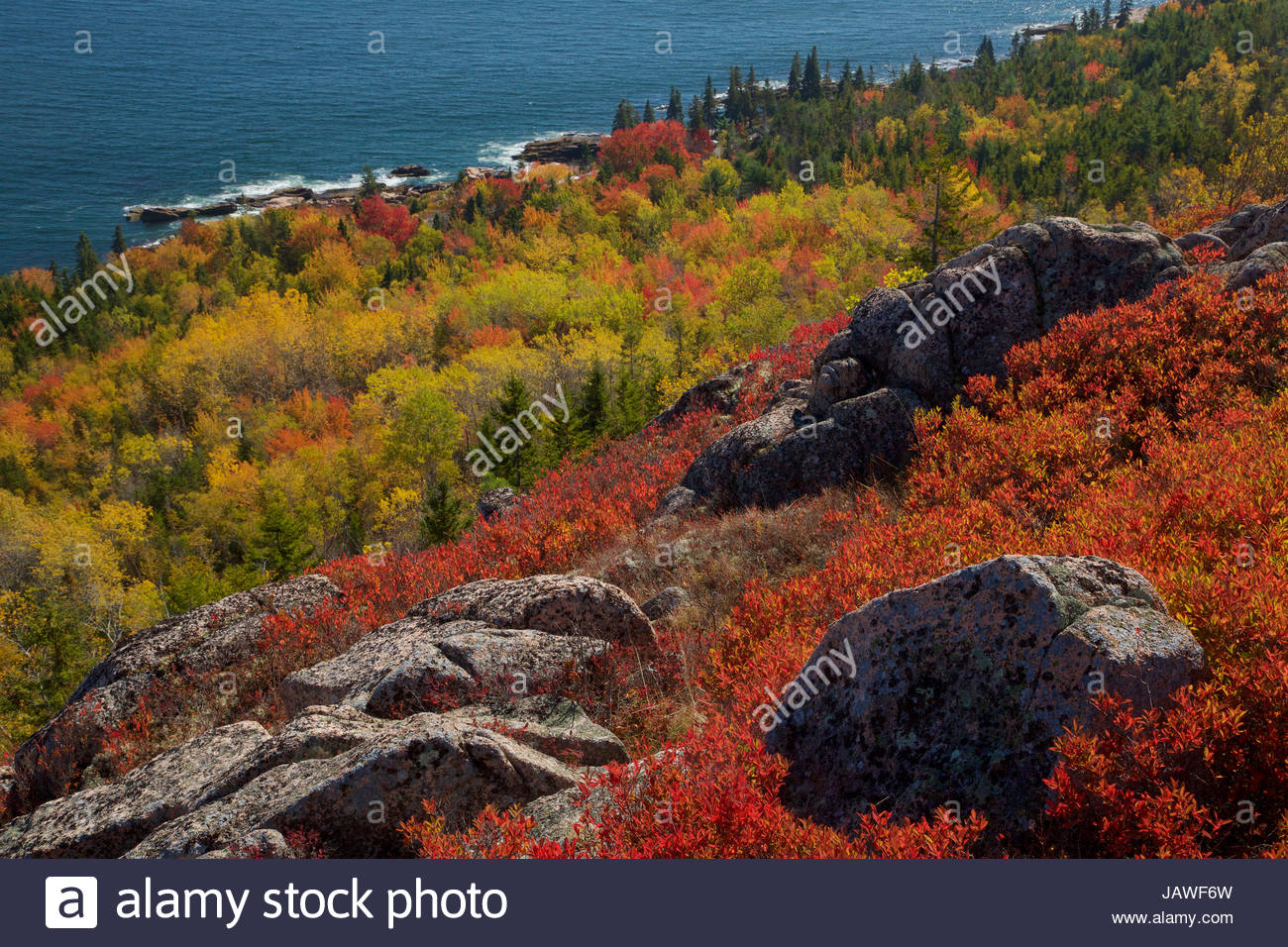 Vibrant fall colors on slopes leading down to the Eastern shore of Acadia National Park. - Stock Image