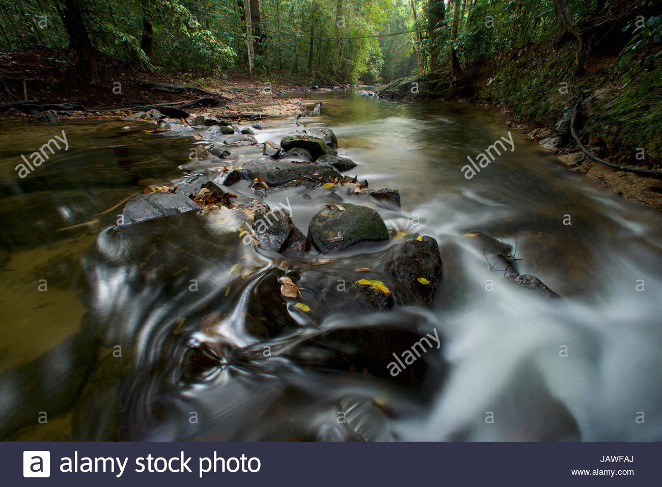 Rain forest stream in Gunung Palung National Park. - Stock Image