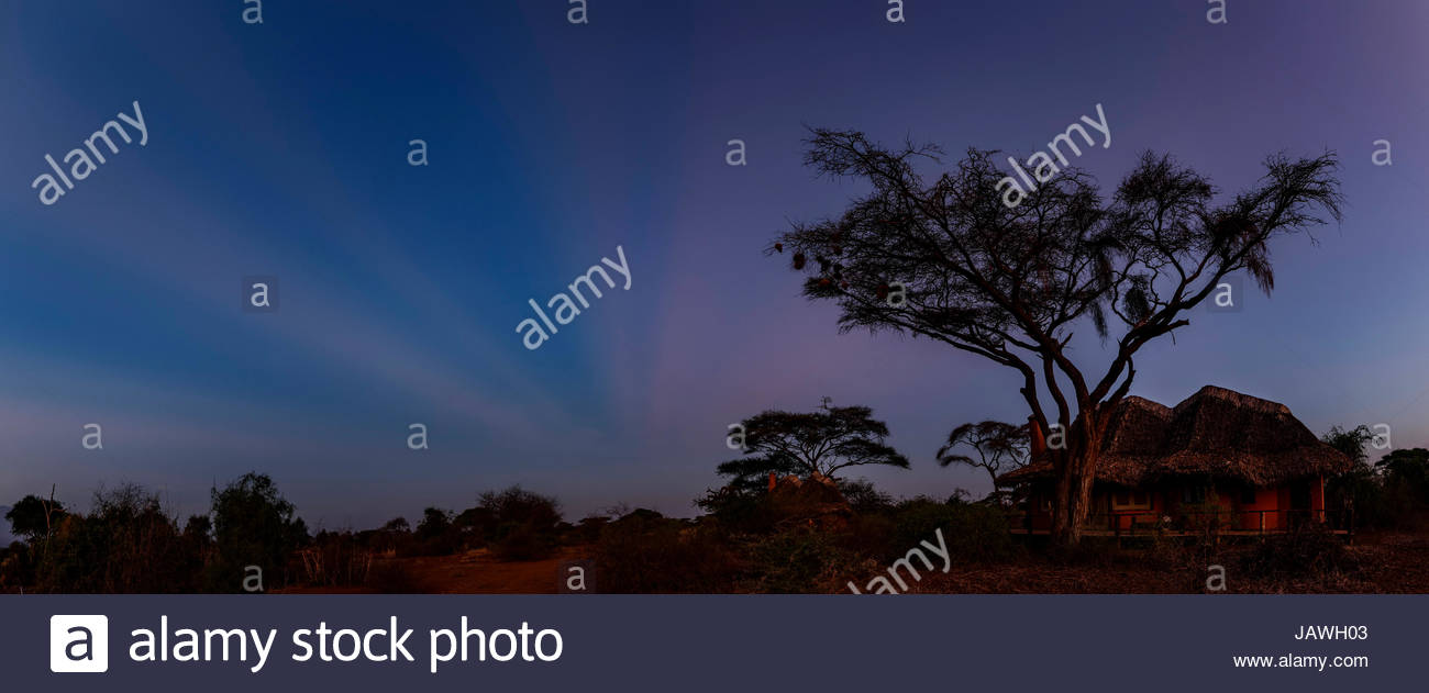 Anticrepuscular rays before sunrise above an acacia tree in Amboseli National Park. - Stock Image