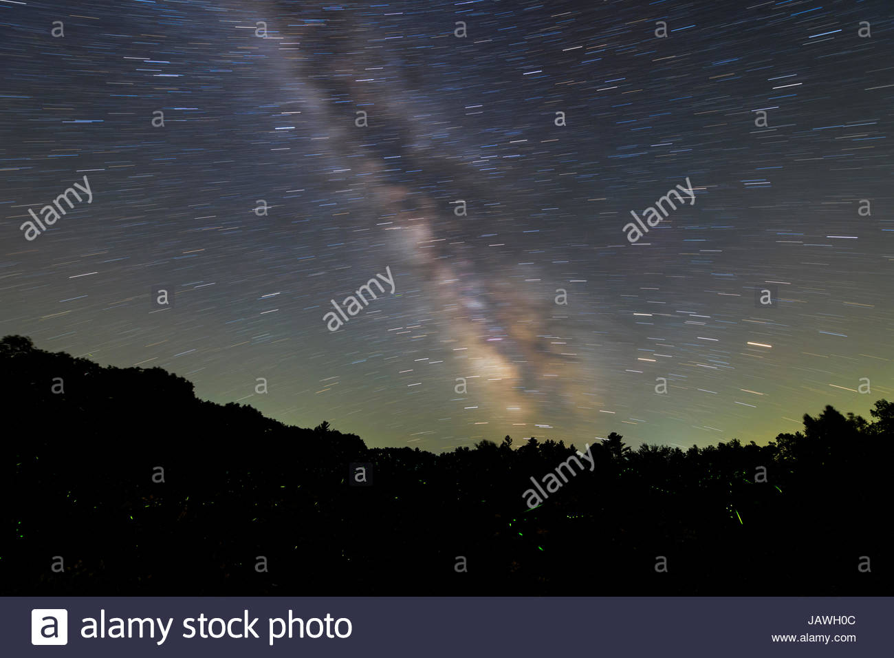 Star trails above fireflies in Maine. - Stock Image