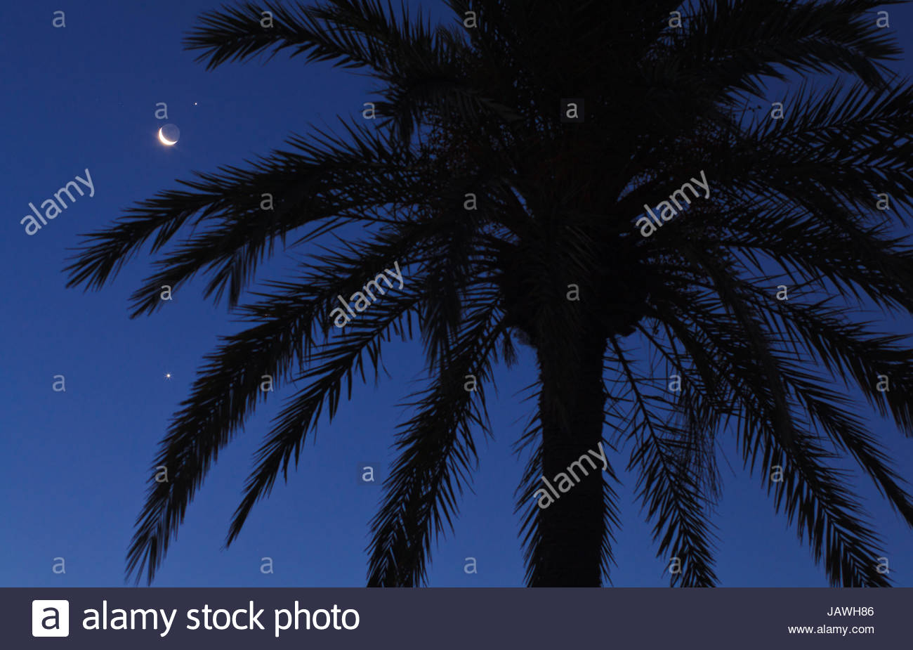 Silhouette of palm trees with crescent moon in Djerba, Tunisia. - Stock Image
