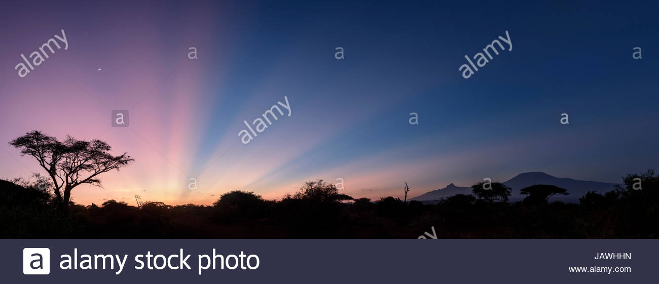 Silhouette of acacia tree with Mount Kilimanjaro at sunrise in Amboseli National Park, Kenya. - Stock Image