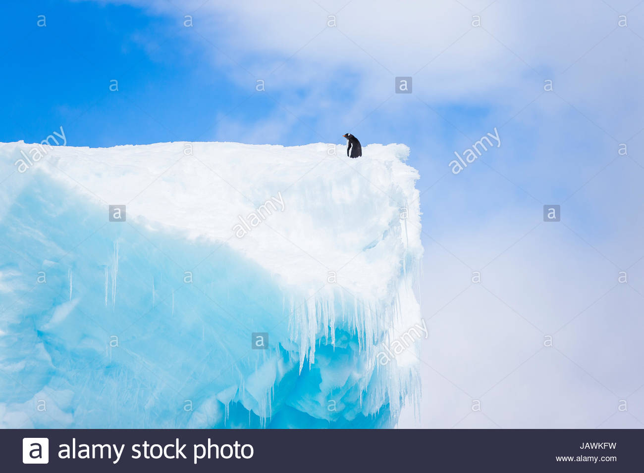 A lone penguin sits on top of a tall iceberg in Antarctica. - Stock Image