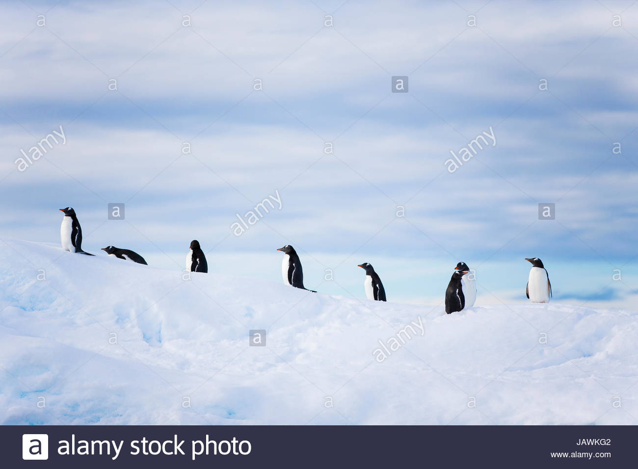 Penguins on top of an iceberg in Antarctica. Stock Photo