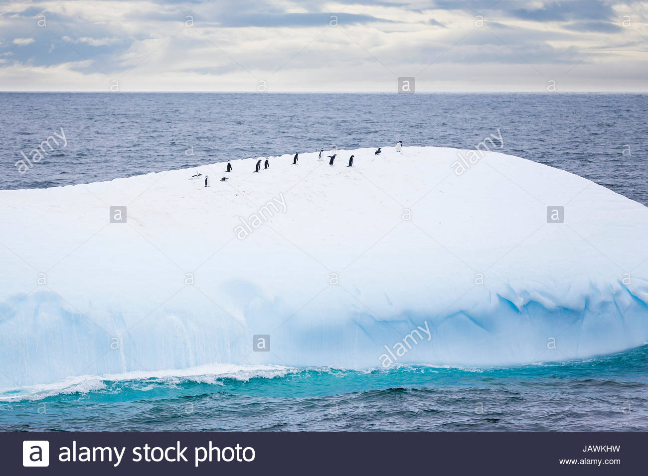 Penguins on top of an iceberg in Antarctica. - Stock Image