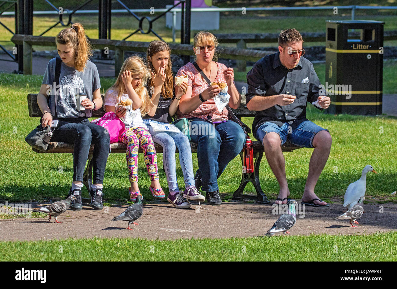 family feeding pigeons and eating lunch  in park on a sunny summers day - Stock Image