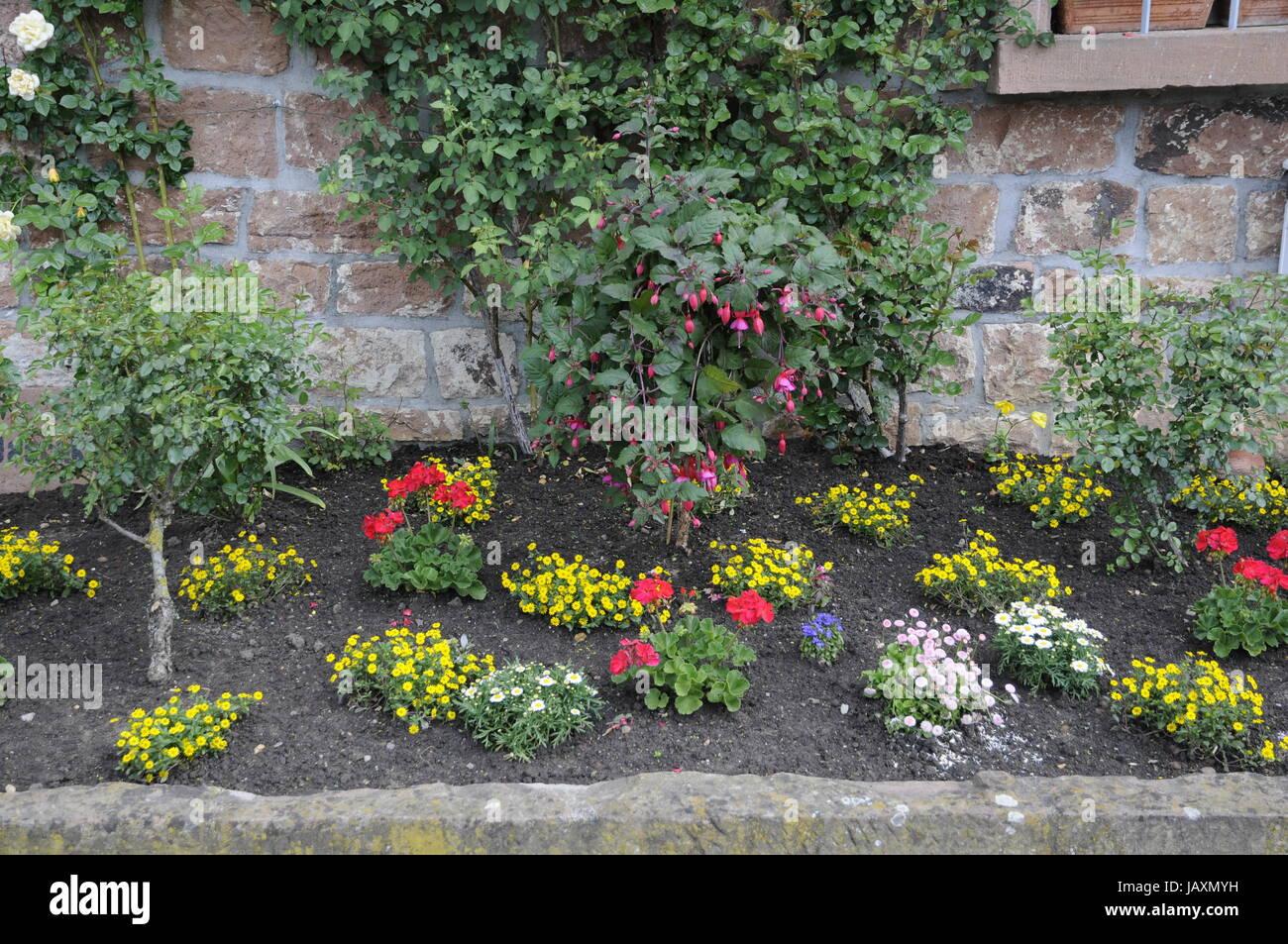Blumenrabatte Rabatte Blumen Zierpflanzen Garten Park Stock