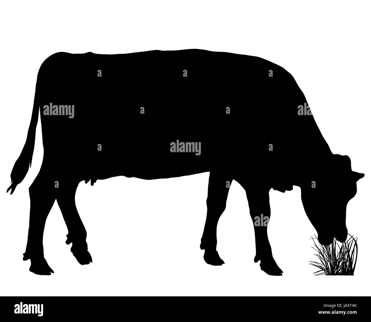 Weidende Kuh Stock Photo