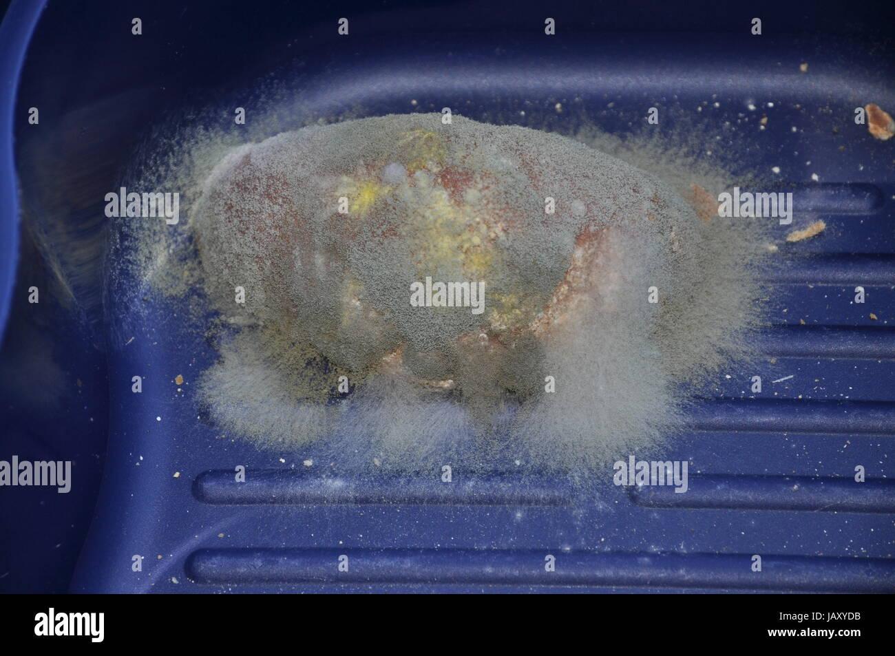 Brotschimmel, schimmel, schimmel, verschimmelt, verdorben, schimmlig, schimmelig, lebensmittel, schimmelpilz, schimmelpilze, Stock Photo
