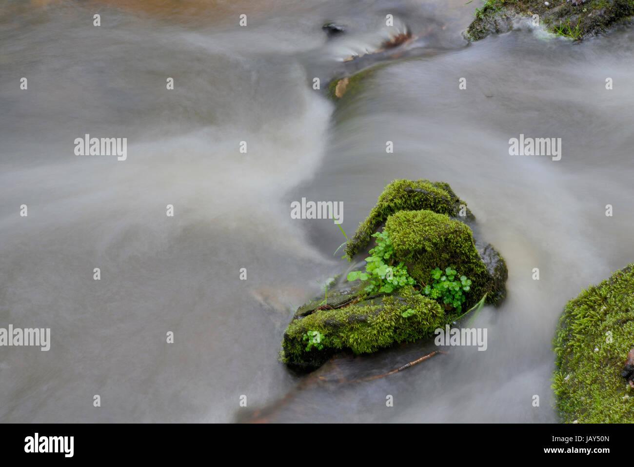 bach, wasser, fließen, fließend, wald, natur, frisch, trinkwasser, sauber, natürlich, sprudelnd, quellwasser Stock Photo