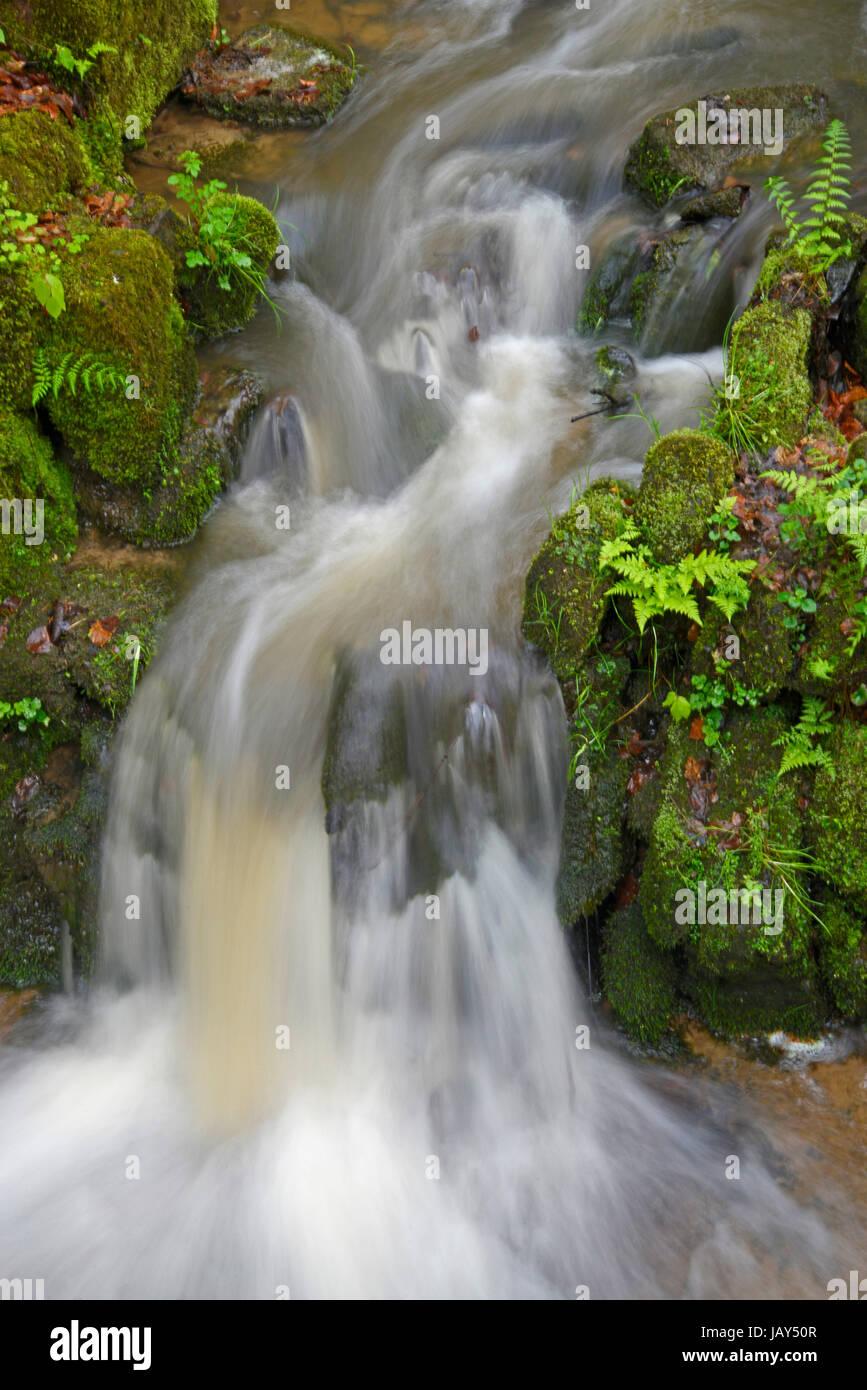 bach, wasser, fließen, fließend, wald, natur, frisch, trinkwasser, sauber, natürlich, sprudelnd, quellwasser, stromschnelle, Stock Photo