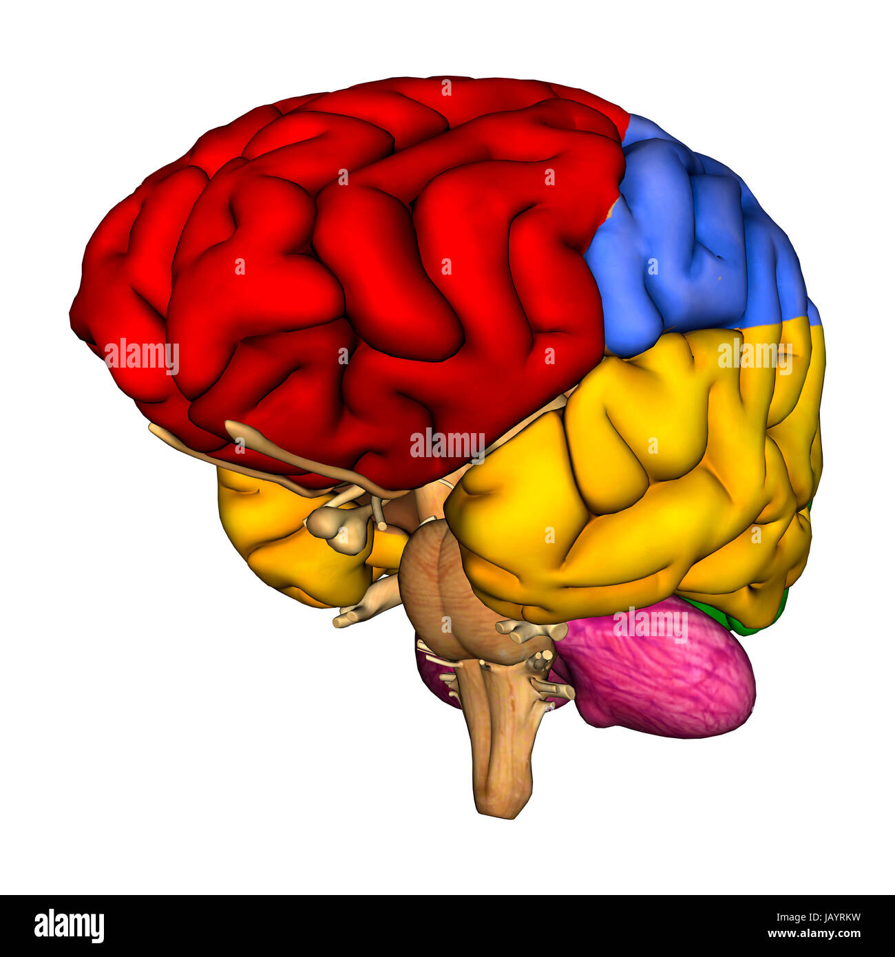 3d Brain Diagram - Block And Schematic Diagrams •