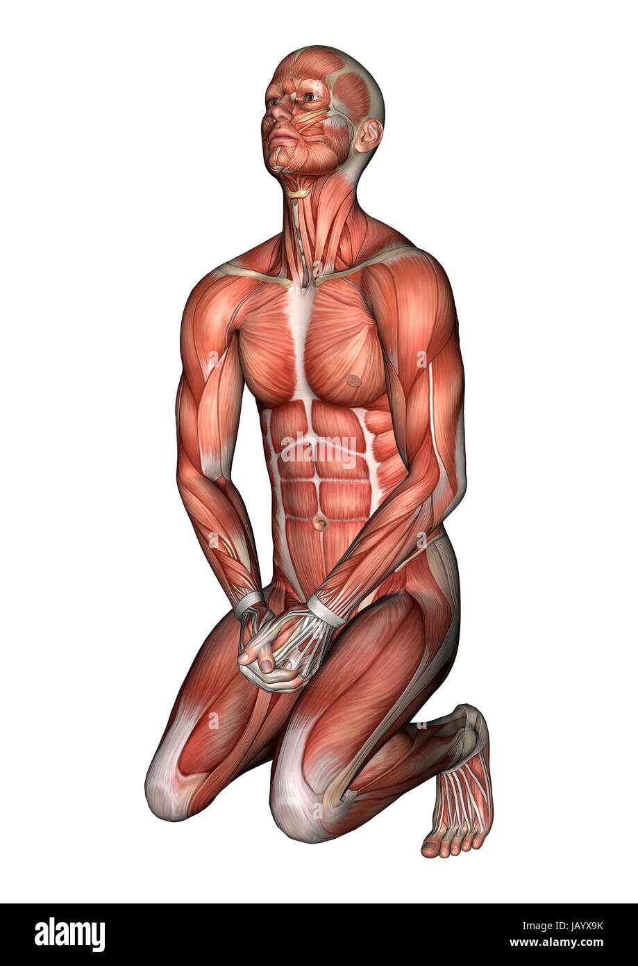 3D digital render of a praying male anatomy figure with muscles map ...