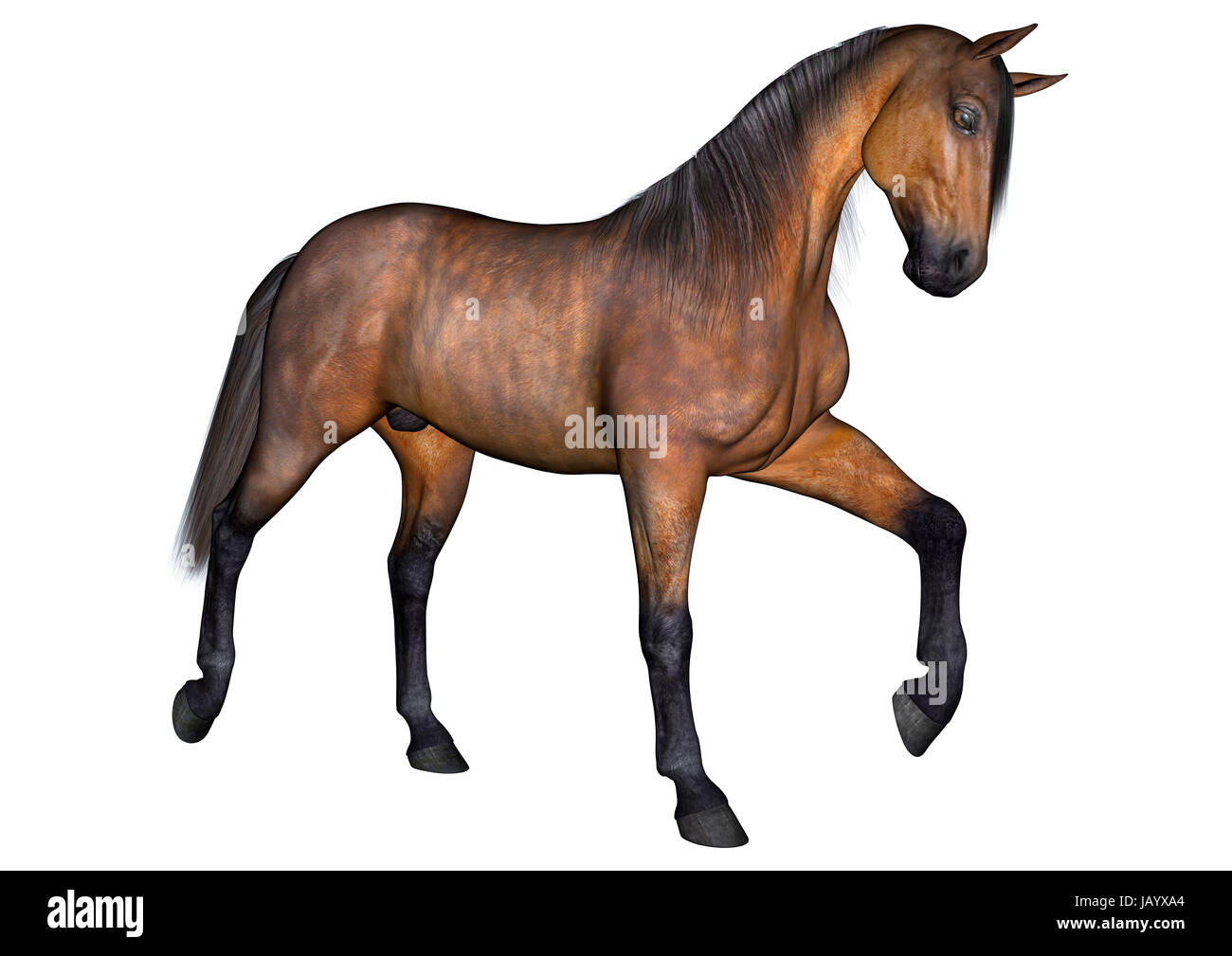 3D digital render of a beautiful trotting horse isolated on white background - Stock Image